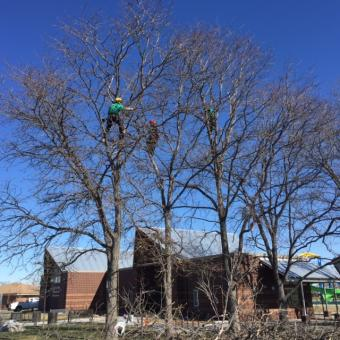 Top Notch Tree Service – One of the Most Famous Landscaping Companies in Fort Collins